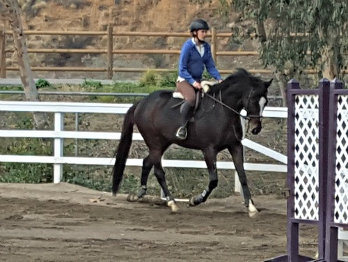 Awkward jumps in photo, but cute pony!