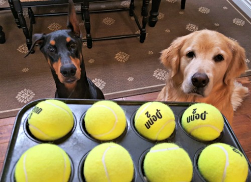 Can you tell which tennis ball is hiding the treat?