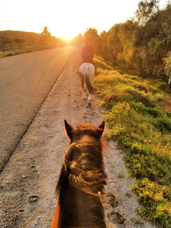 A Trail After the Torrents | Saddle Seeks Horse