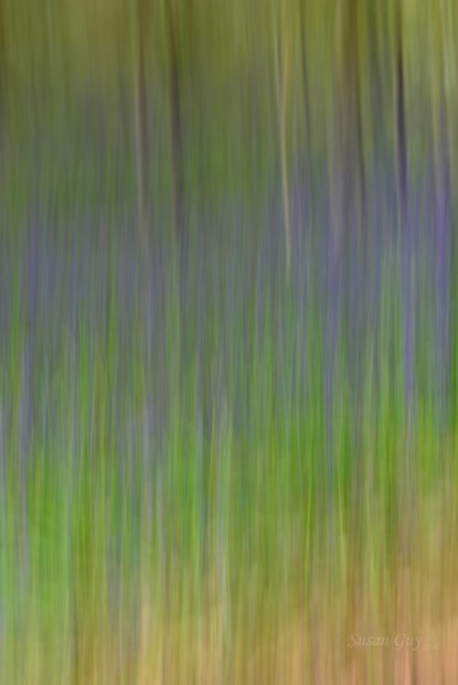 Susan Guy_Calke Abbey_Bluebells_Abstract_27.04.16_4 c
