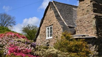 Susan Guy_Stoneywell_Cottage Garden_Azalea_01.05.15_(6_w