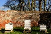 Susan Guy_Calke Abbey_Bee Hive_09.03.17_1 c