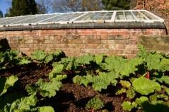 Susan Guy_Calke Abbey_Garden_Rhubarb_09.03.17 c