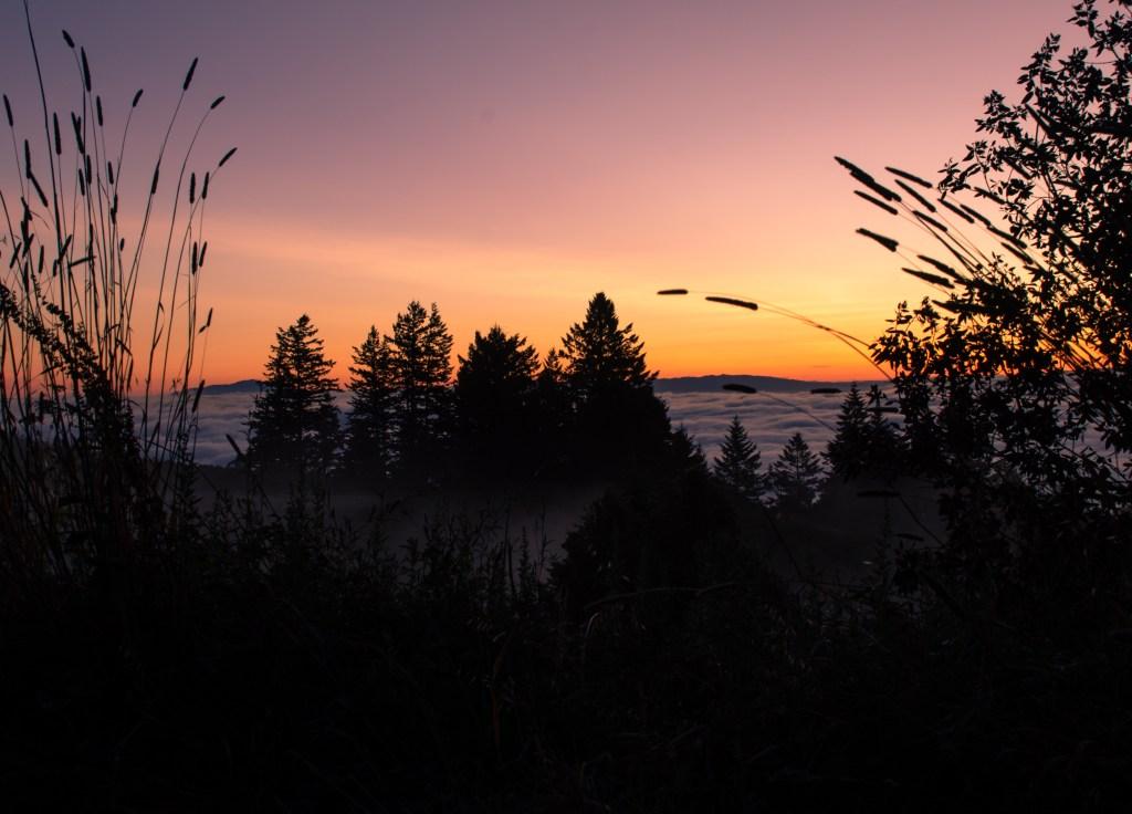 Good-Morning-Sillicon-Valley.jpg