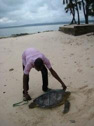 Soepschildpadden meten met Renatura