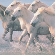 2019 Gemini New Moon begins Metal Horse Month