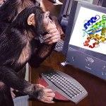 Monkey solves problems