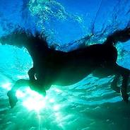 2020 Solstice Eclipse begins Horse Month