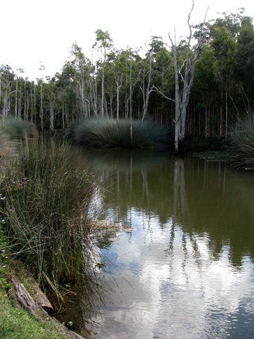 View across lagoon 2