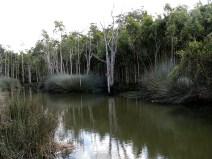 View across the lagoon