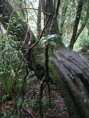 Old bent tree