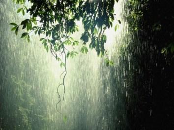 rain-trees