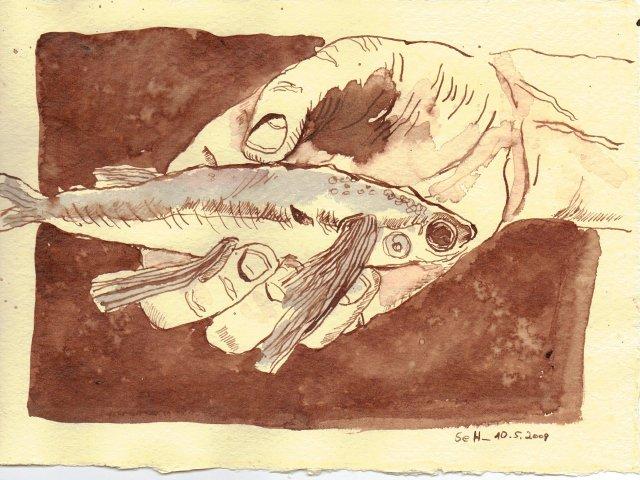 Iß doch den zweiten fliegenden Fisch. - Zeichnung von Susanne Haun