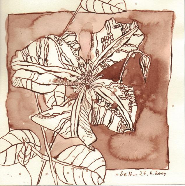 Lebensfreude der Klematis - Zeichnung von Susanne Haun