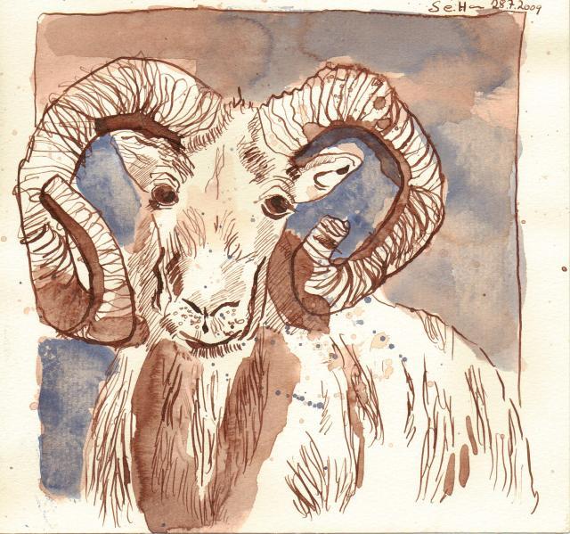 Widder - Zeichnung von Susanne Haun