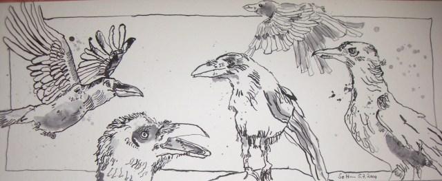 Ein Vogelschwarm - Zeichnung von Susanne Haun