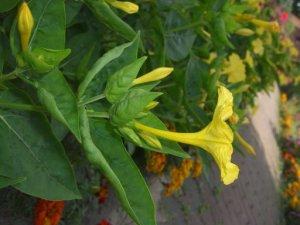Gelbe Blume - Foto von Susanne Haun