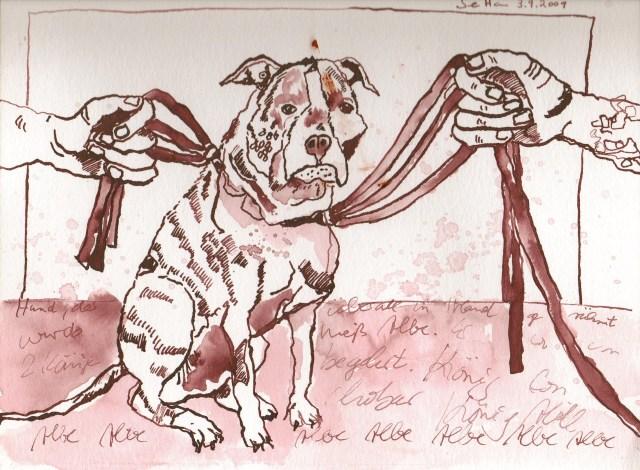 Der Hund Albe - Zeichnung von Susanne Haun