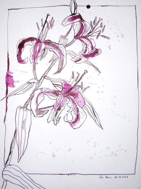 Voll aufgeblühte Lilien - Zeichnung von Susanne Haun