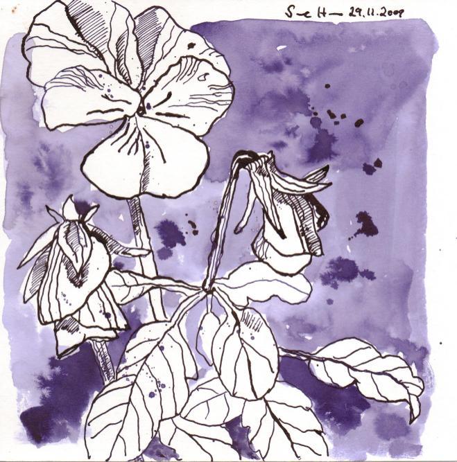 Stiefmütterchen - Zeichnung von Susanne Haun 20 x 20 cm, Tusche auf Bütten