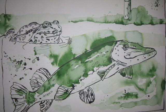 Hecht und Frosch im Shannon - Zeichnung von Susanne Haun - 30 x 40 cm - Tusche auf Bütten