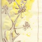 Waid - Zeichnung von Susanne Haun - 30 x 20 cm - Tusche und Aquarell auf Bütten