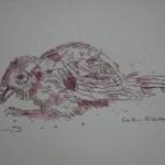 Spatz - Zeichnung von Susanne Haun - 20 x 20 cm - Tusche auf Bütten