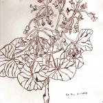 Hortensie im Winter - Zeichnung von Susanne Haun - 20 x 20 cm - Tusche auf Bütten