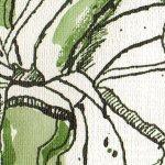 Amaryllis Ausschnitt - Zeichnung von Susanne Haun