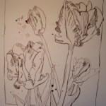 Tulpenstrauss - Zeichnung von Susanne Haun - 25 x 20 cm - Tusche auf Aquarellkarton