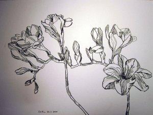 Fresien - Zeichnung von Susanne Haun - 26 x 36 cm - Tusche auf Bütten