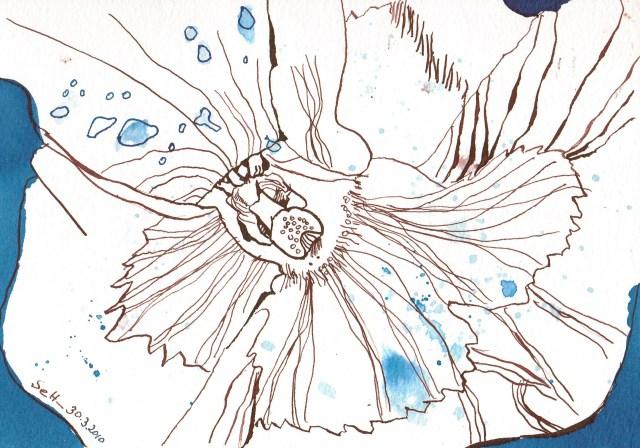 Stiefmütterchen - Zeichnung von Susanne Haun - 17 x 21 cm - Tusche auf Hahnemühle Bütten