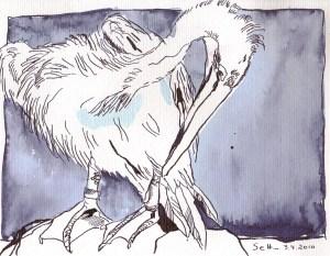 Putzender Pelikan - Zeichnung von Susanne Haun - Tusche auf Bütten - 24 x 17 cm