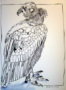Königsgeier - Zeichnung von Susanne Haun - 32 x 24 cm - Tusche auf Bütten