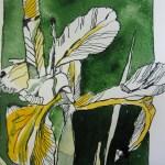 Iris - Zeichnung von Susanne Haun - Tusche auf Hahnemühle Papier