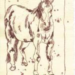 Pferd 1 - Zeichnung von Susanne Haun - 20 x 15 cm - Tusche auf Silberburg