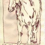 Pferd 2 - Zeichnung von Susanne Haun - 20 x 15 cm - Tusche auf Silberburg