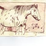 Pferd 3 - Zeichnung von Susanne Haun - 20 x 15 cm - Tusche auf Silberburg