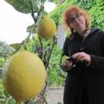 Ich und das Zitronenbäumchen - Foto von Conny Niehoff