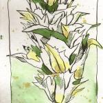 Artischocke 2 - Zeichnung von Susanne Haun - 30 x 15 cm - Tusche und Aquarell auf Bütten