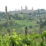 Blick auf San Gimignano durch den Wein 2 - Foto von Susanne Haun