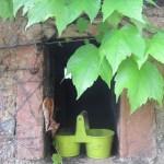 Weinbewachsene Terasse bei unserem Ferienhaus - Foto von Conny Niehoff