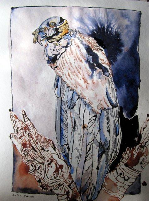 Königsgeier - Zeichnung von Susanne Haun - 48 x 36 cm - Tusche und Aquarell auf Bütten