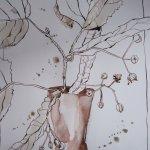 Lindenblüten - Zeichnung von Susanne Haun - 30 x 20 cm - Tusche auf Bütten