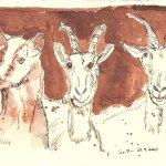 Drei Ziegen - Zeichnung von Susanne Haun - 15 x 20 cm - Tusche auf Bütten