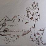 Entstehung Ithas Insel - Ausschnitt Frosch - Zeichnung von Susanne Haun