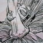 Ausschnitt Zeichnung Pilz von Susanne Haun