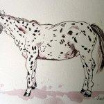 Prince - Zeichnung von Susanne Haun - 17 x 24 cm - Tusche auf Bütten