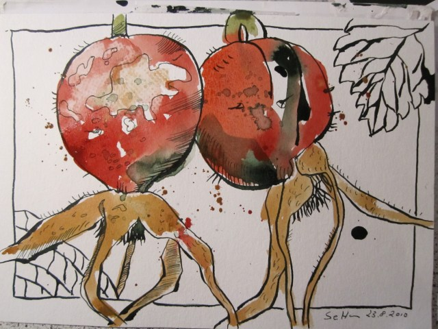 Entstehung 2 Hagebutten - Zeichnung von Susanne Haun - 17 x 22 cm - Tusche auf Bütten