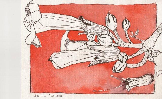 Rote Trompetenblume - Zeichnung von Susanne Haun - 17 x 22 cm - Tusche auf Bütten